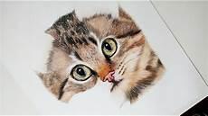 dibujos de gatos como dibujar y pintar un gato realista how to draw and