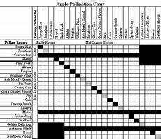 Apple Tree Pollination Chart Planning For Apple Trees