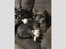 Cute Sleeping Dog With It's Puppies On The Sofa   LuvBat