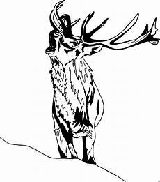 Ausmalbilder Tiere Hirsch Hirsch Roehrt Ausmalbild Malvorlage Tiere