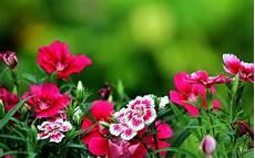 flower wallpapers for pc desktop pink flowers wallpaper allwallpaper in 2472 pc en