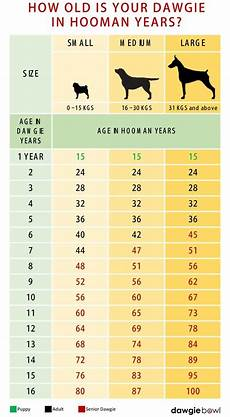 Puppy Age Chart How To Calculate Your Dog S Age Dawgiebowl Blog
