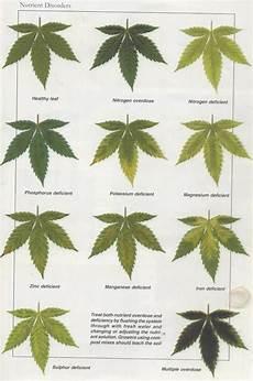 Nutrient Deficiency Chart Cannabis Nutrient Disorders Medical Marijuana Pinterest