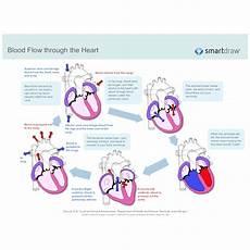 Chart Of Blood Flow Through Heart Blood Flow Through The Heart