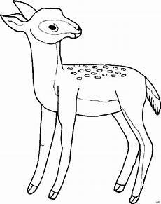 Ausmalbilder Tiere Rehe Reh Schaut Sich Um Ausmalbild Malvorlage Tiere