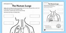 Respiratory Disease Fact Chart Answer Key The Human Lungs Worksheet Worksheet Human Lungs Fact
