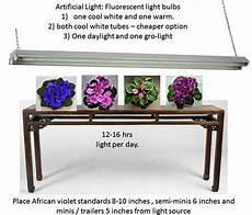 African Violet Lighting Artificial African Violets Baby Violets Page 4
