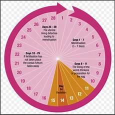 24 Day Menstrual Cycle Chart Menstrual Cycle