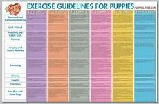 Puppy Exercise Chart Exercise Guidelines For Puppies From Puppy Culture