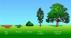Secondary Succession Ecological Succession Lm White Biology