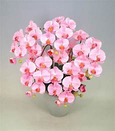 Light Pink Phalaenopsis Orchid Yoran Phalaenopsis Orchid Flower Light Pink 5 Stand
