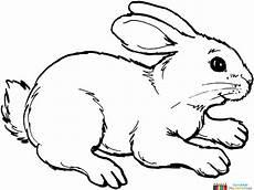 kaninchen zum ausmalen mit bildern ausmalbild hase