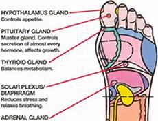 Norman Reflexology Foot Chart Norman On Mindbodygreen