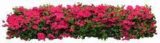 barres de separation fleurs
