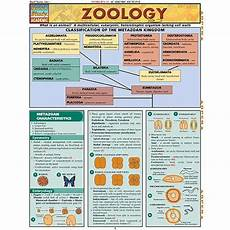 Zoology Chart Zoology Study Chart 4 00