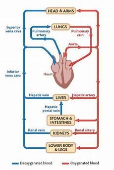 Chart Of Blood Flow Through Heart Heart Anboswell