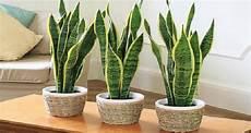 piante da letto 5 piante da mettere in da letto per dormire meglio