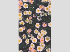 Floral Wallpaper iPhone   PixelsTalk.Net