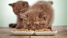 Kitten Eating Chart Best Homemade Cat Food Recipes Amp Cat Treat Recipes