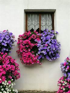 fioriere da davanzale pin di colombo su balconies and windows fiori