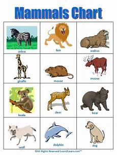 Animal Chart For Kindergarten Mammals Chart Www Loving2learn Com Mammals Animal