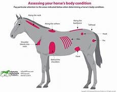 Healthy Horse Weight Chart Kentucky Performance Products Time To Evaluate Weight