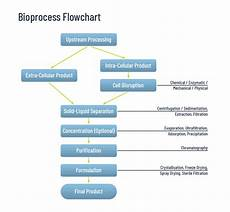 Bioprocess Flow Chart Smart Chromatography Bypass Conventional Purification