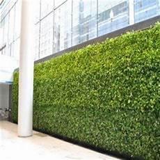 Vertical Green Vertical Green Wall ग र न व ल हर द व र Greenscape