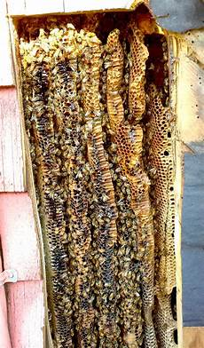 Honey Bee Hive And Swarm Removal Picture Gallery