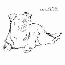 border collie laying coloring page