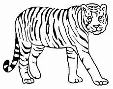 siberian tiger coloring page at getcolorings free