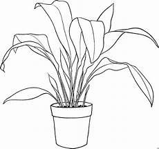 grosse zimmerpflanze im topf ausmalbild malvorlage blumen