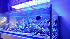 Best Aquarium Lights One More Happy Customer From Spain Atlantik V4 Led