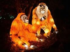 The Zoo Wild Lights The Awe Inspiring Wild Lights At Dublin Zoo
