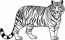 Simple Tiger Outline Tiger Clip Arts Images Free Download Black And White