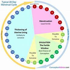 24 Day Menstrual Cycle Chart When Are You Most Likely To Get Conception Advice