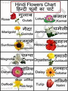 Flower Chart With Names And Pictures Gallery Flowers Names