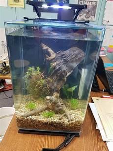 5 Gallon Tank Light First Tank In Years 5 Gallon Portrait Planted Aquariums