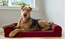 Sofa Style Cooling Gel Memory Foam Pet Bed Png Image by Groupon Goods Toys Electronics Clothing More Save