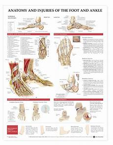 Foot Anatomy Chart Anatomy And Injuries Of The Foot And Ankle Anatomical