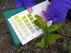 Plant Color Chart Saving The Coastal Banksia Trees Of Wilson S Prom