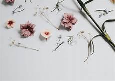 Minimalist Aesthetic Flower Wallpaper floral artwork on surface photo free flower image on