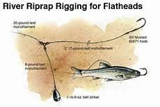 Flathead Catfish Weight Chart Rippin And Rappin Catfish Rigs