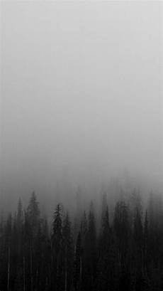 Wallpaper Iphone Black And White by Black And White Mist Forests Wallpaper Iphone Wallpapers