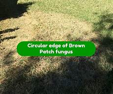 Brown Patch Fungus How To Treat Fungus In Sod Houston Grass South