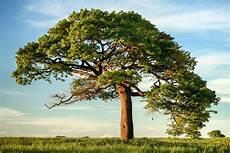 Framily Tree How To Start Your Family Tree Family Tree