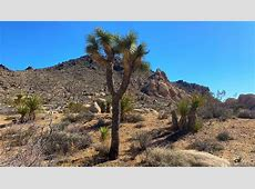 Joshua Tree National Park reopens, though many campsites