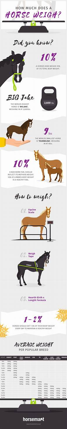 Healthy Horse Weight Chart What Is The Average Weight Of A Horse Horsemart