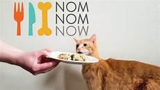 Cat Food Reviews Nomnomnow Cat Food Review We Tried Nomnomnow Fresh Cat Food