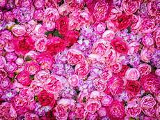 Floral Backgrounds Beautiful Background Of Artificial Pink Peonies Wedding
